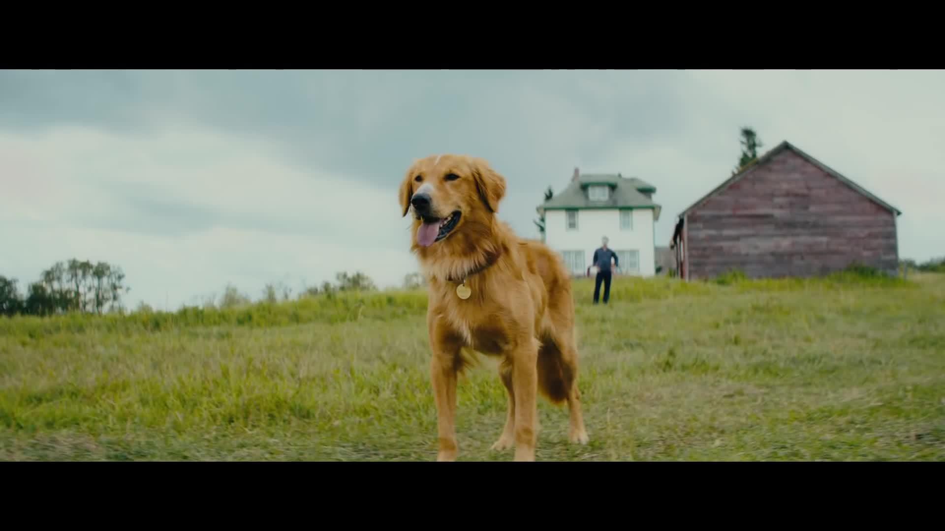 A Dog's Journey-English Movie in Dubai