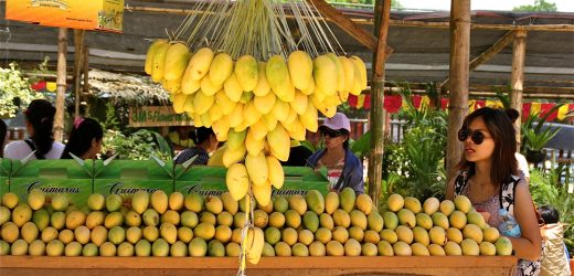 Three-day Festival of Pakistani Mangoes, Extended Season for Mango Lovers