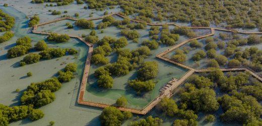 Abu Dhabi Mangrove Walk Park is now open
