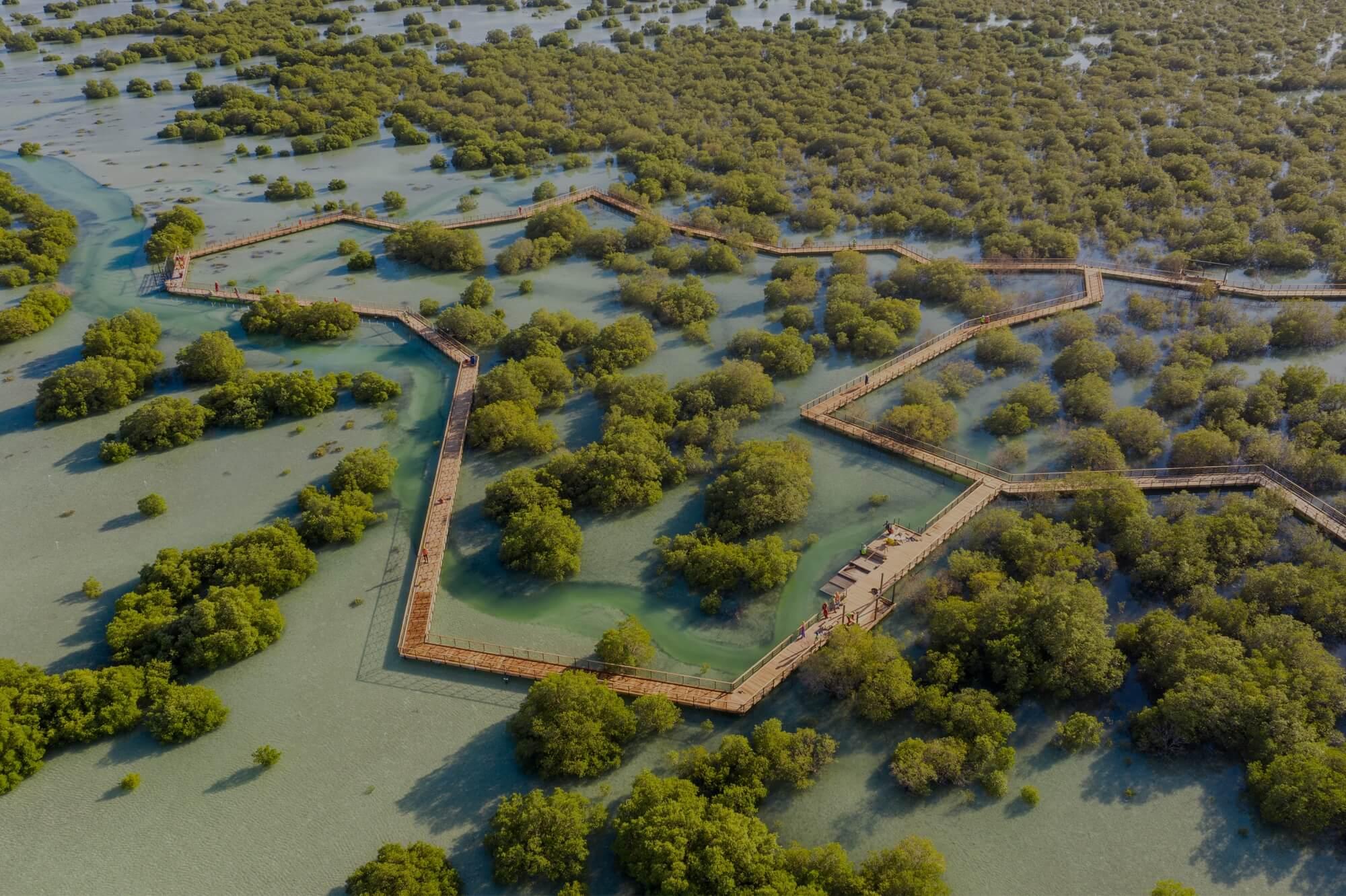 În Abu Dhabi a fost deschis un parc de mangrove   / excursie / imobil /